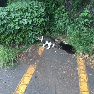湘南平の猫ちゃん