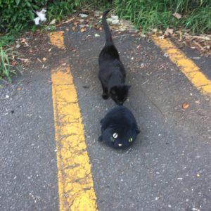 湘南平の黒猫達