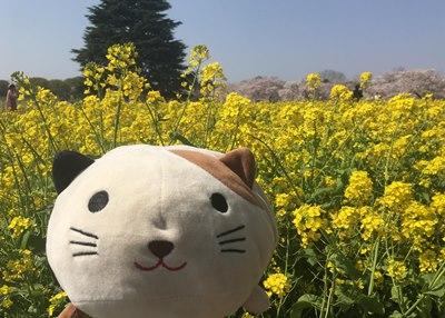 昭和記念公園,ゴマ